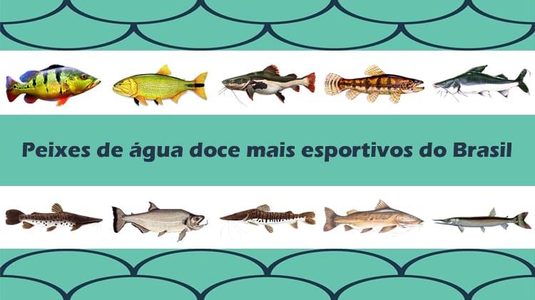10 peixes de água doce mais esportivos do Brasil