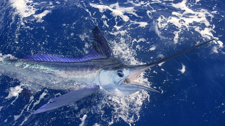 pesca no litoral baiano
