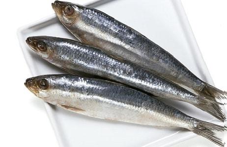 isca pesca de praia sardinha