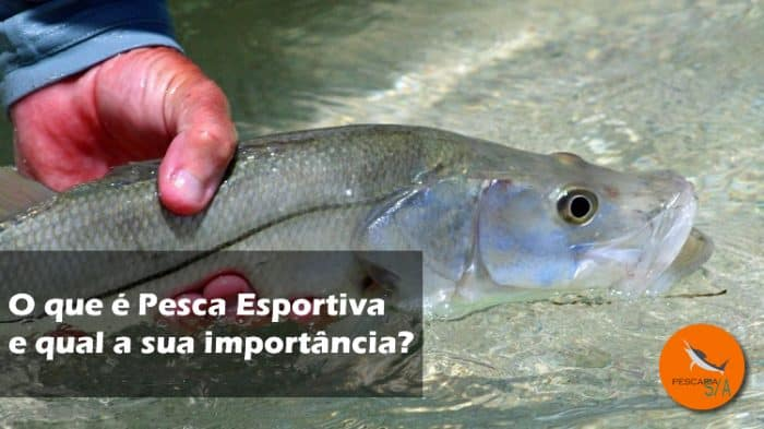 o que é pesca esportiva e qual a sua importância para os pescadores, para o meio ambiente e para a economia do setor de pesca