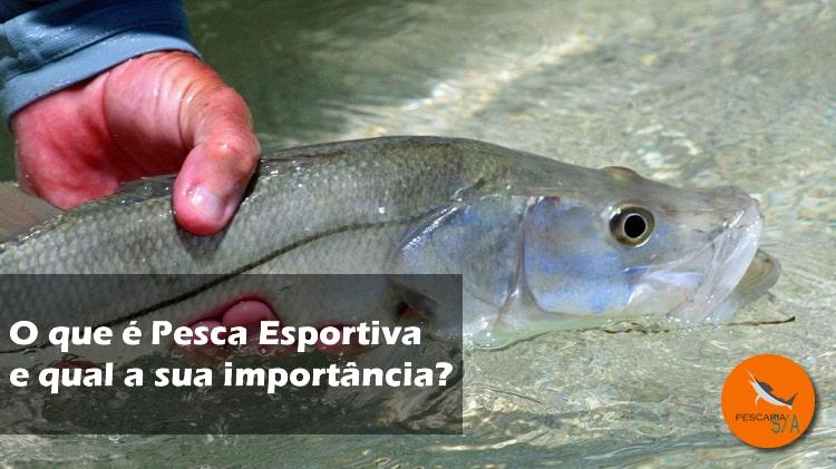 O que é Pesca Esportiva e qual a sua importância?