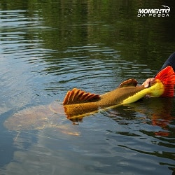 momento da pesca