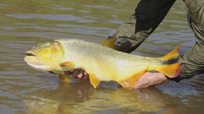 10 peixes que todo pescador deve preservar em sua pescaria