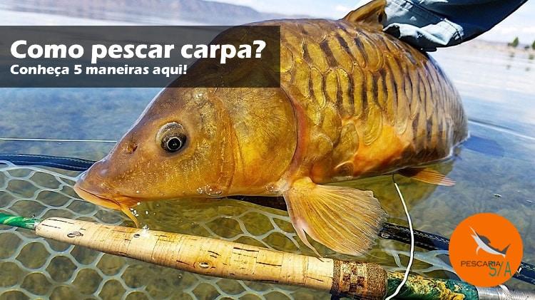 Como pescar Carpa? Conheça 5 maneiras!