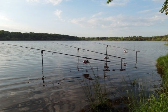 pescar carpa