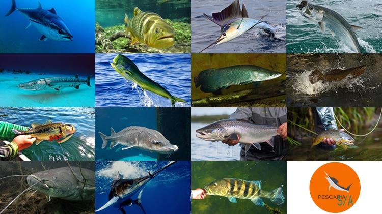 15 peixes mais incríveis na pesca esportiva mundial