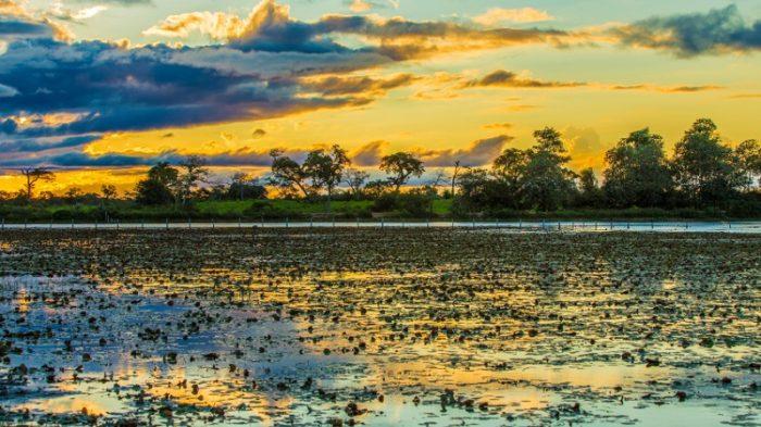 pesca américa do sul pantanal
