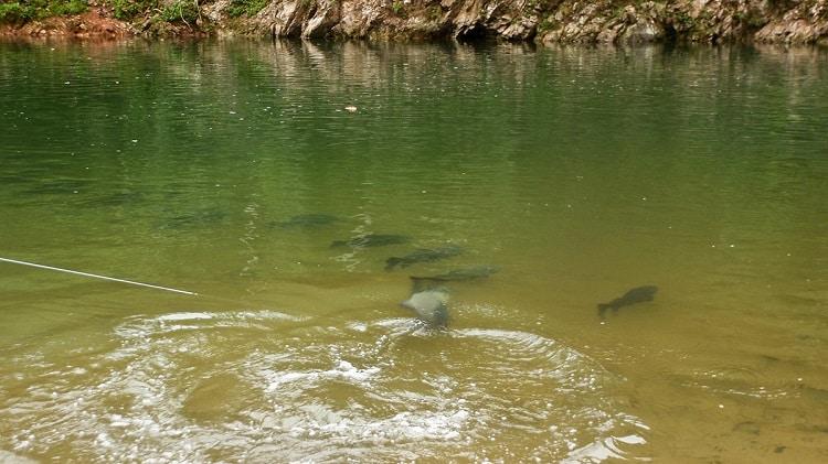 pesca américa do sul rio água negra bolívia