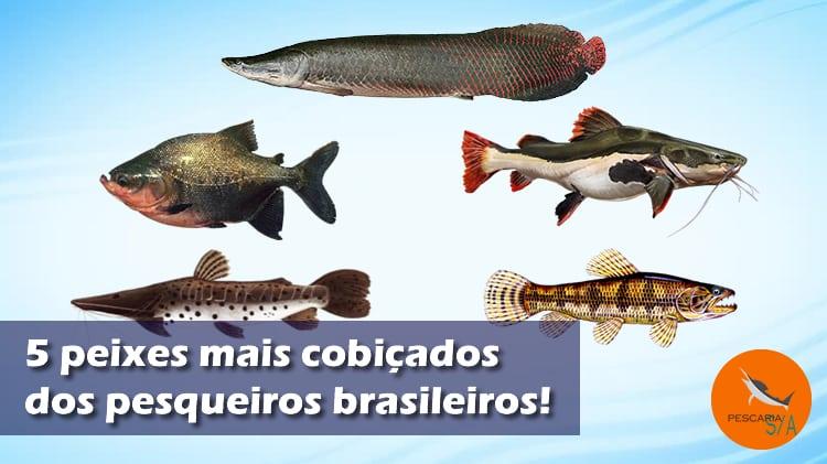 5 peixes mais cobiçados por pescadores de pesqueiros