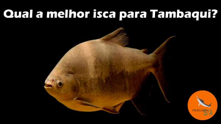 Como pescar Tambaqui: Conheça as melhores iscas!