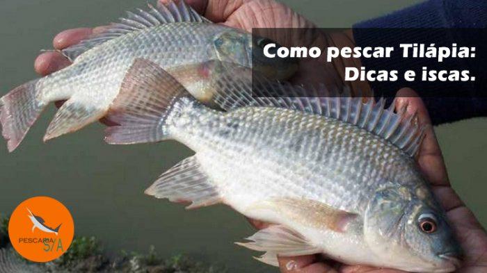 como pescar tilápia conheça dicas e iscas