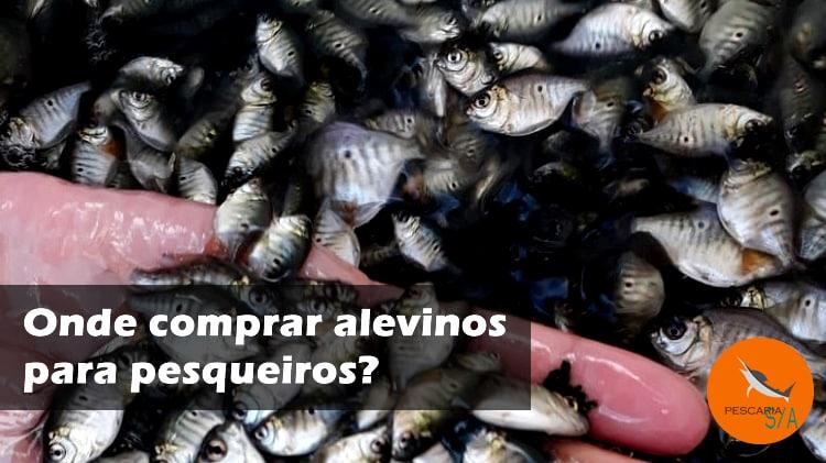 Onde comprar alevinos para pesqueiros?