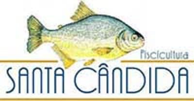 alevinos para pesqueiros piscicultura santa cândida