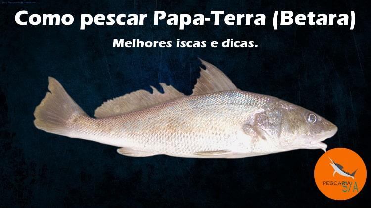 Como pescar Papa-Terra (Betara): melhores iscas e dicas