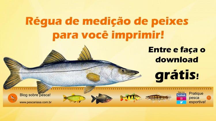 Régua para medir peixes para imprimir – GRÁTIS