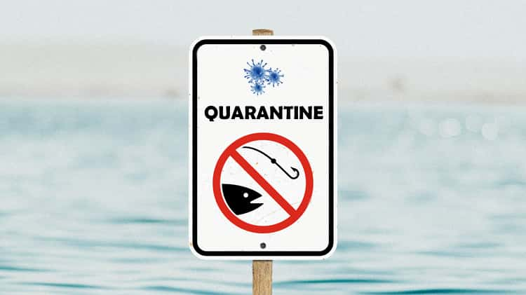 Fishing in the quarantine: what is your opinion on this?