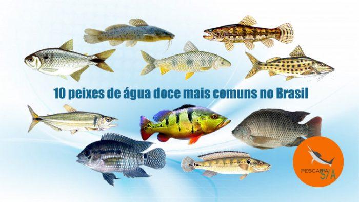 10 peixes de água doce mais comuns no brasil