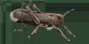 insetos é uma das iscas que funcionam em qualquer lugar do mundo