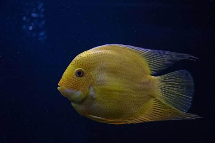 sonhar com peixe de um modo geral