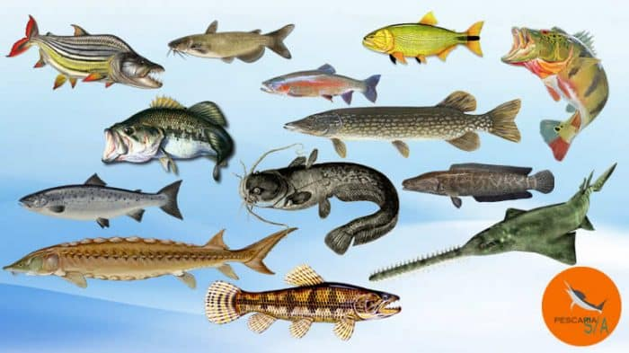 top 13 species os freshwater fish in the world sport fishing