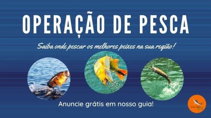 operação de pesca guia de pesca saiba onde pescar os melhores peixes na sua região do brasil