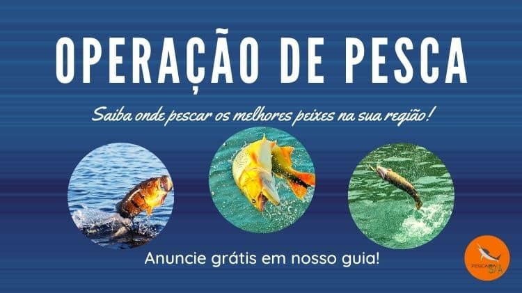 Operação de pesca: um mini guia de turismo de pesca