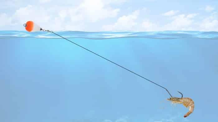 pescar robalo com camarão vivo