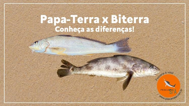 Papa-Terra (Betara) x Biterra – Conheça as diferenças!