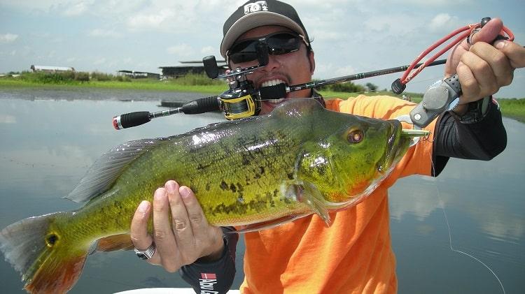 Tucunaré: onde pescar esse peixe – habitat – iscas