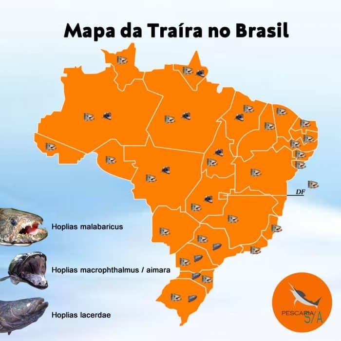 mapa da traíra no brasil onde pescar espécies e regiões