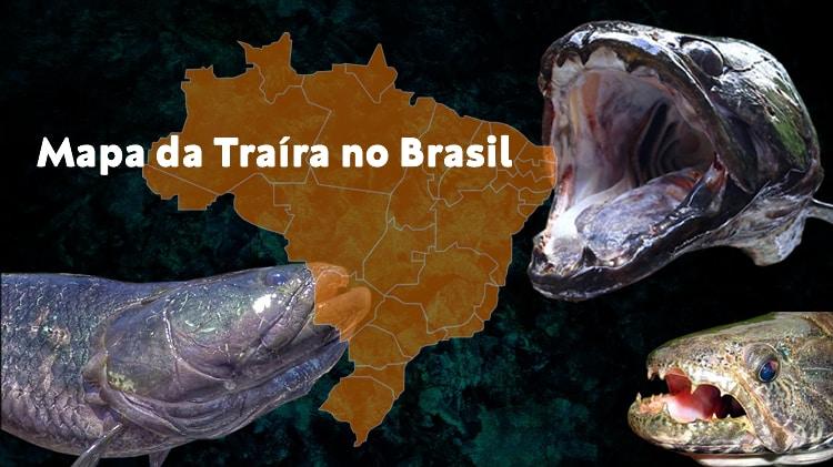 Mapa da Traíra no Brasil – Espécies e Regiões