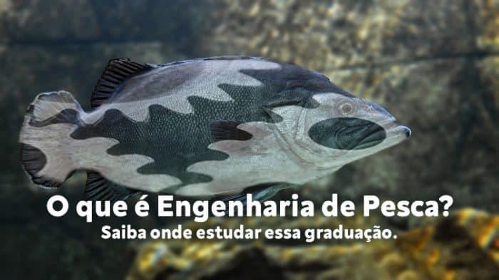 o que é engenharia de pesca e onde estudar graduação em engenharia de pesca no Brasil