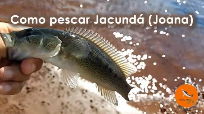 como pescar jacundá joana joaninha michola isca natural e artificial