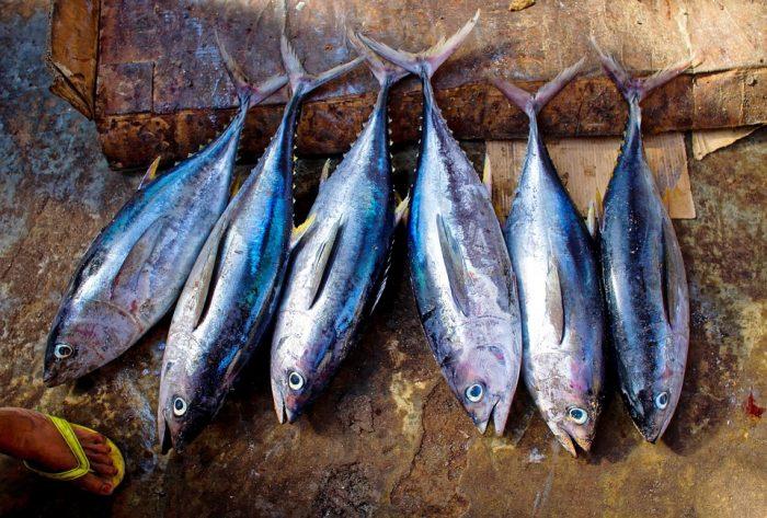 atum peixes mais consumidos do mundo