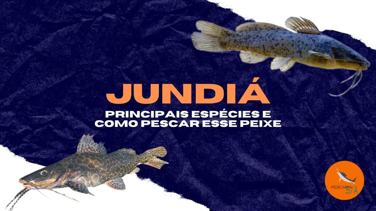 jundiá principais espécies e como pescar esse peixe