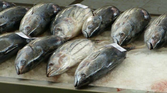 os 7 peixes mais consumidos no mundo